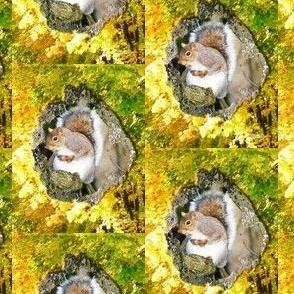 autumnhoarding