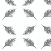Pine - Gull
