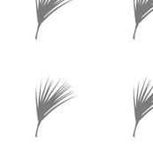 Palmetto - Gull
