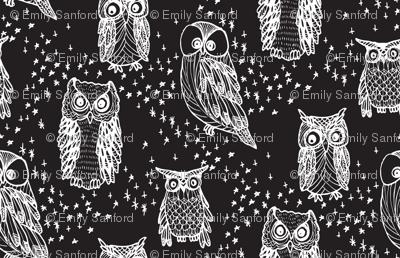 Little Owl in Black