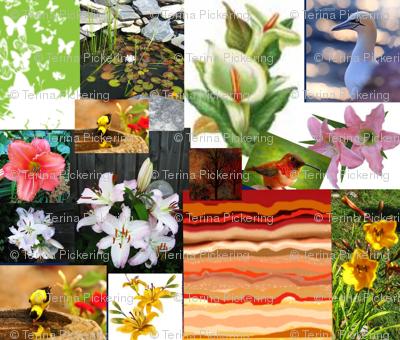 Lilies-2-ed