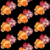 Roses, diagonal on black