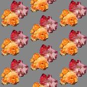 Roses, diagonal on grey