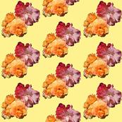 Roses, diagonal on yellow