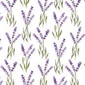 Rlavenderbunches_shop_thumb
