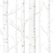 Birch Grove in Storybook