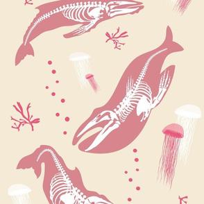 Baleen Whale Skeletons / Cream