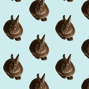 sitting rabbit in aqua