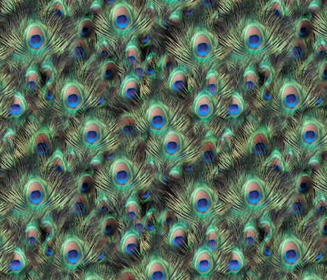 Photographic Peacock Feather fabric by cutencomfy on Spoonflower - custom fabric