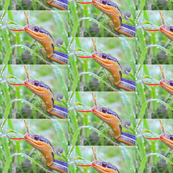 Colorful Snake in Grass w/ Water Droplets -  Live Wildlife Shot