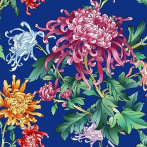 chrysantemum_electric_blue