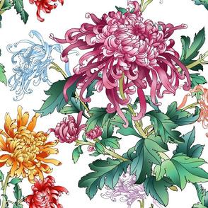 chrysantemum_white