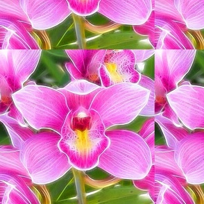 Pink Orchid, 2
