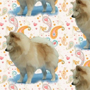 Pomeranian and paisley