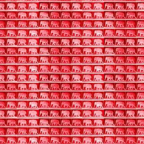 Muybridge Tromp (cinnabar)