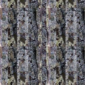Lichen gray brown