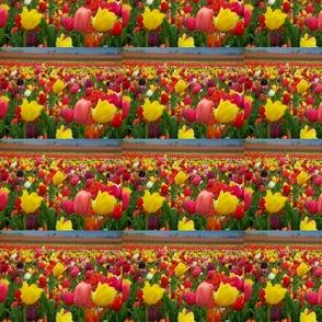 tulips_field