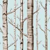 Birch Grove in Sky