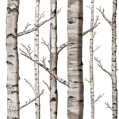 Birch Forest in Black and White