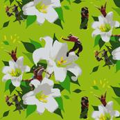 Lily Boys Stamen Service