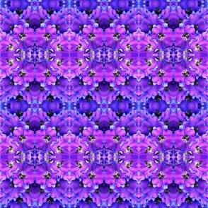 flower_fields_7_a_intense_blue