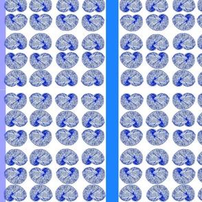 Sea Shells Galore