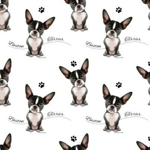 Boston Terrier Black white Pattern M