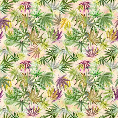 Bright Cannabis Leaves