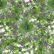 Cannabis Spirals