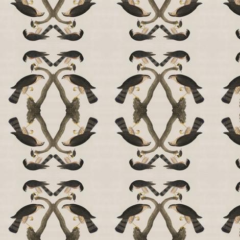 Audubon Hawk fabric by dscougar on Spoonflower - custom fabric