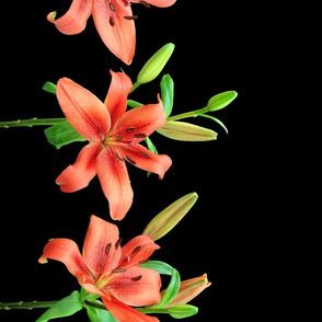 Lily border (black)