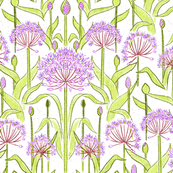 Allium Garden White