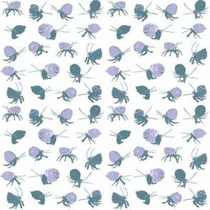Tri-Color Hermit Crabs