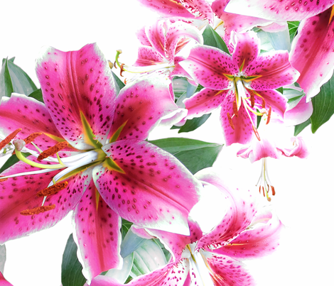 Lilies fabric by baleandtwine on Spoonflower - custom fabric