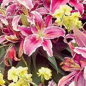 Rubrum-lilies2kb_shop_thumb