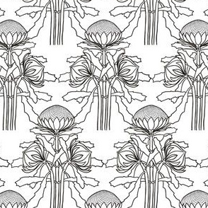 Black + white waratahs for coloring in, by Su_G