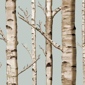 Birch Grove in Overcast