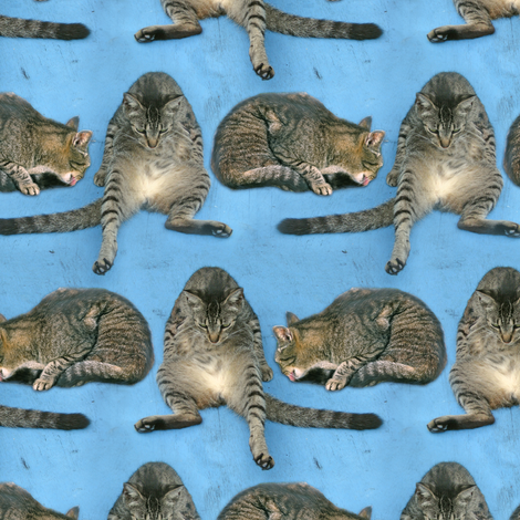 When in Doubt, Wash fabric by eclectic_house on Spoonflower - custom fabric