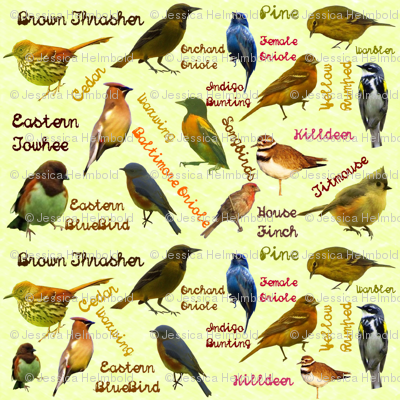 Rreastern_birds_preview