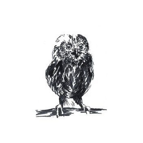 Inky Owl