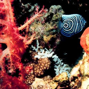 reef2052_big