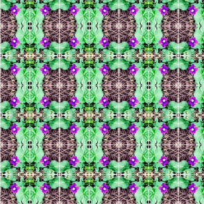 violetta d'aprile