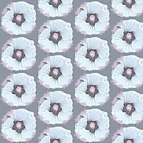 Markham Hibiscus 3