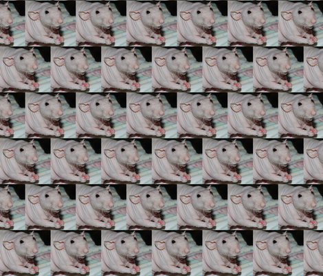 Nekkid Rattie fabric by rattieworld on Spoonflower - custom fabric