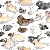 "4"" Pugs on the run - white"