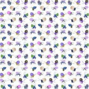 Spring Hermit Crabs