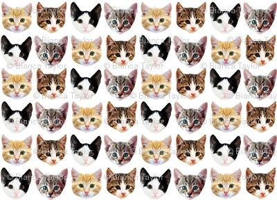 Cat/Kittens Pattern