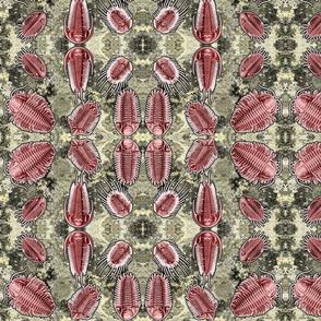 trilobites red