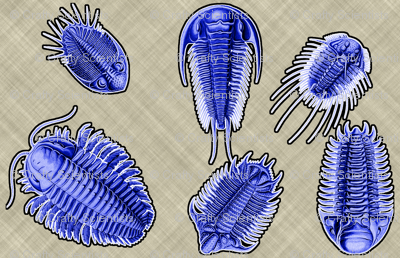 trilobites conservative purple