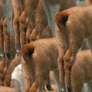 Llama Tessellation